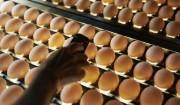 マルイのエフコープ産直白たまご>手塩にかけて育てた鶏の卵を、細かいチェック機能でとことん検査。