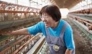 増田養鶏場の「コープさが生協産直さくらたまご・もみじたまご」>家族経営のアットホームな養鶏場で育った、プリプリッとおいしい。