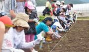 6月20日[ 種をまく]大豆畑から①>一粒の大豆から、物語はじまる。