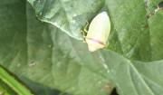 9月下旬[害虫の襲来]>無農薬栽培の難しさを学ぶ。