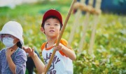 11月18日[大豆の収穫]大豆畑から②>昔ながらの脱穀を体験。