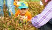 11月18日[大豆の収穫]大豆畑から①>畑の大豆たちを前に。