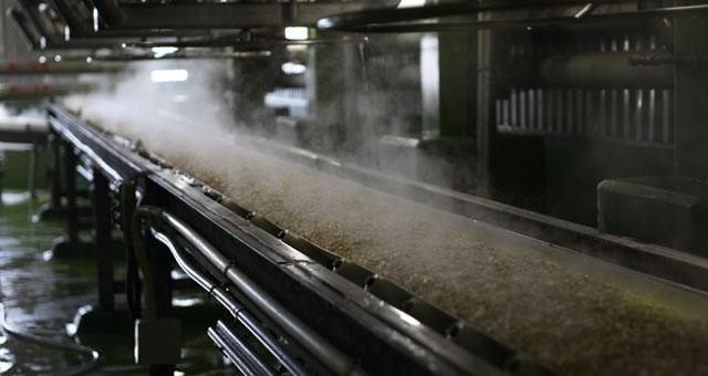 蒸し上げられた大豆が運ばれて