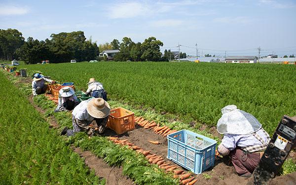 vegetable_0302_09