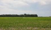 Soybean update~大豆の生育状況報告。