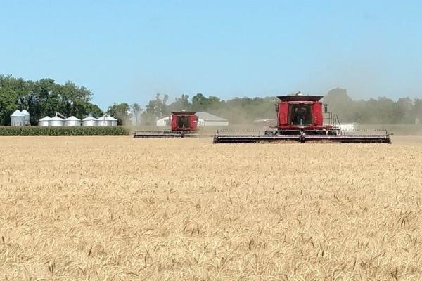小麦刈り取り加工