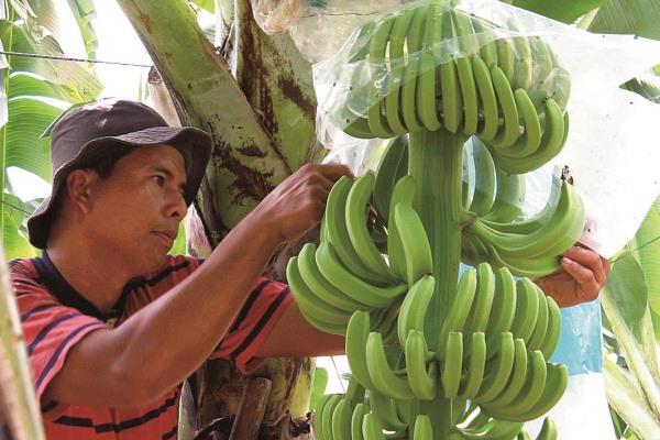 banana_friendry03