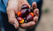 パーム油は世界最良のオイル。#01持続可能なパーム油のためにできること。